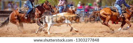 Calf being lassoed in a team calf roping event by cowboys at a country rodeo #1303277848