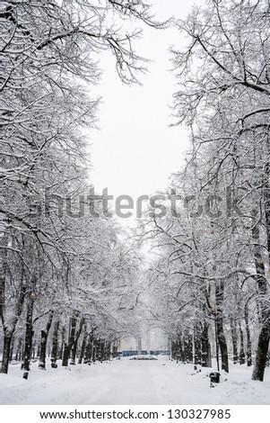 Old trees alley during a snowfall. Kaarli boulevard, Tallinn, Estonia #130327985