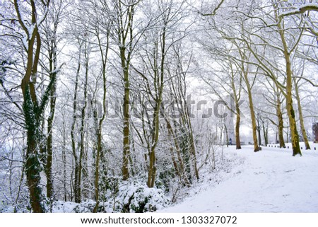 Beautiful view of winter landscape with snow-covered on trees and street in the park located in Liege, Belgium. Travel and holiday lifestyle concept. #1303327072