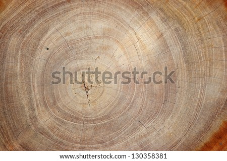 Wood texture of cut tree trunk, close-up