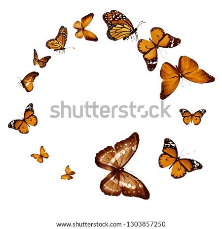 Flock of  butterflies on white #1303857250
