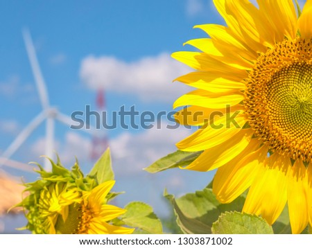 Sunflower image Electric turbine and electric pole backdrop  #1303871002