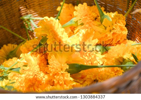 Marigolds beautiful are stored in a wooden basket.