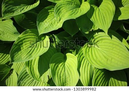 Green leaves, summer background. #1303899982