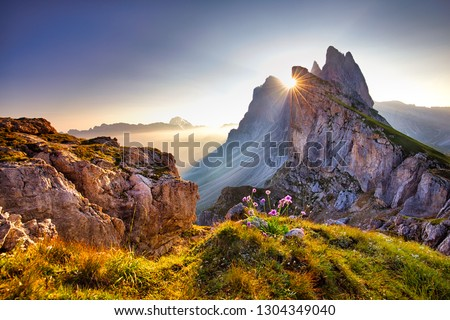Amazing view on Seceda peak. Trentino Alto Adige, Dolomites Alps, South Tyrol, Italy, Europe. Odle mountain range, Val Gardena. Majestic Furchetta peak. Purple flowers in the morning sunlight. #1304349040