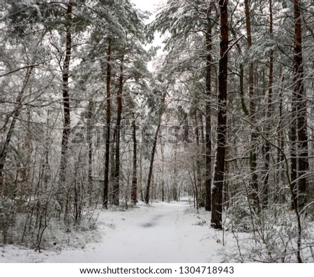 Mazovia, Poland - winter road in the forest #1304718943