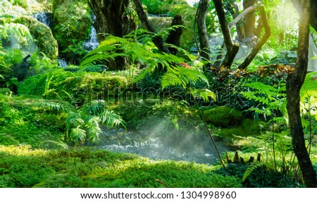 Garden decorated to mimic the tropical rain forest with little river and moss. #1304998960