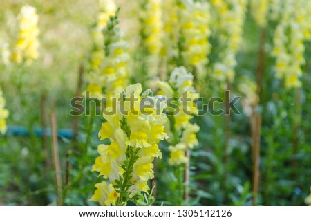 Yellow flowers in the park #1305142126
