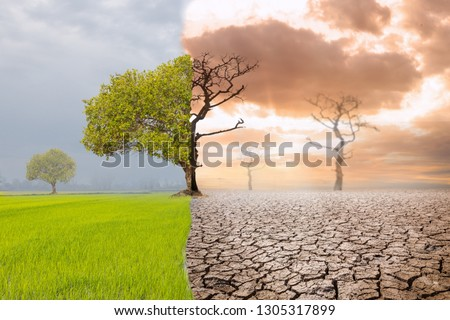Land with dry and cracked ground and green field .Desert,Global warming background #1305317899