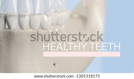 "Anatomical dental model of human teeth for dentistry, dental care, medical students. Title on image ""Healthy Teeth"". 3d illustration #1305318175"