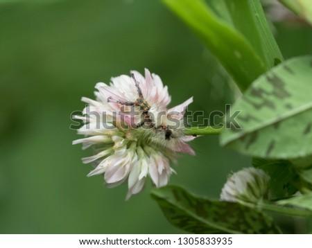 Entomoloy macro insect photography #1305833935
