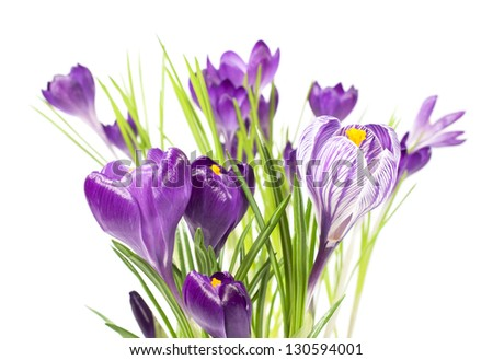 spring crocus bouquet isolated on white #130594001