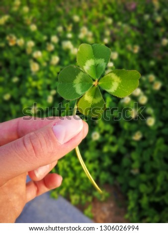 Four leaf clover in the hand #1306026994