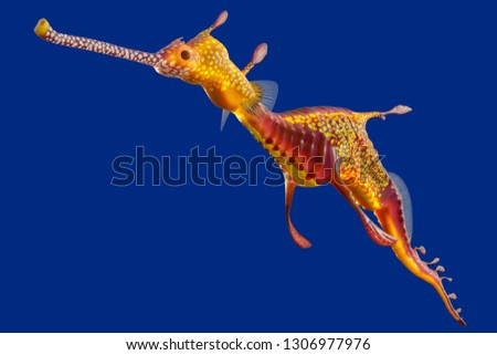 3d rendering of a Weedy seadragon, the ocean creature at Australia and Tasmania island, isolated on blue background with clipping paths. #1306977976