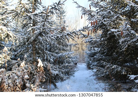 Walking through winter #1307047855