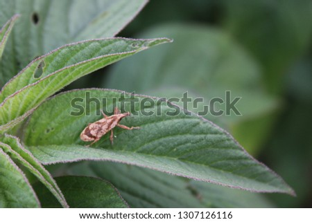 Southern African insects, entomology. #1307126116