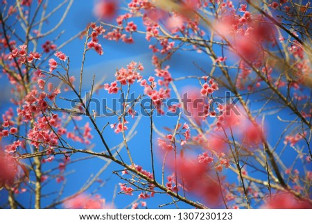 The bright pink flowers that are blooming beautifully have a bright blue sky background,pic for feel good,lovely,happy day,feel in love