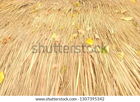 Dry grass dried leaves #1307395342