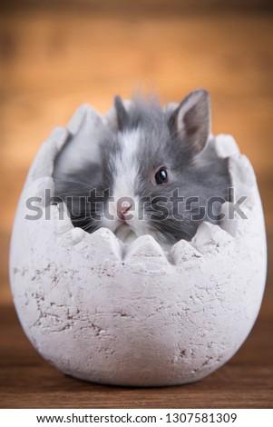 Easter rabbit in egg shells #1307581309