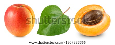 Apricot leaves isolated on white background. Apricot Clipping Path. Apricot collection #1307883355