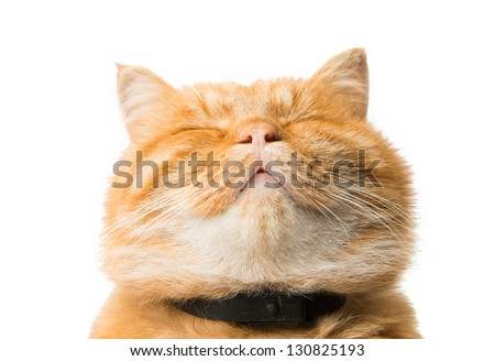 ginger cat isolated on white background #130825193
