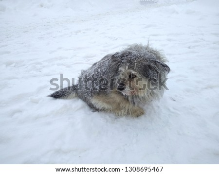 Sad, tired dog on a background of snow. Snow is falling, the dog is looking around. Outdoors. Winter. #1308695467