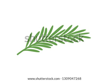 Rosemary branch. Isolated rosemary on white background Royalty-Free Stock Photo #1309047268