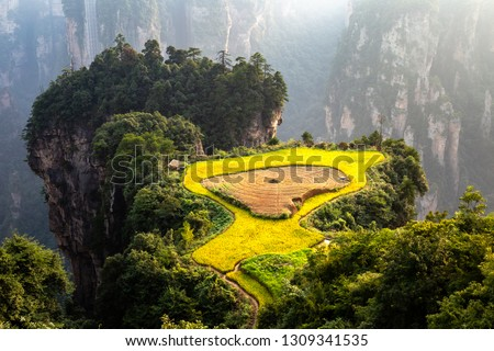 "Spectacular rice terrace, called the ""air garden"", in front of Laowuchang village, in Yuanjiajie area of Wulingyuan National Park, Zhangjiajie, China. This national park inspired ""Avatar"" movie Royalty-Free Stock Photo #1309341535"