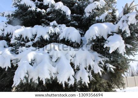 Winter snow scenes #1309356694