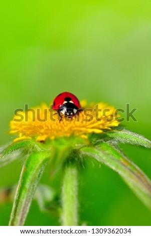 Beautiful ladybug on leaf defocused background #1309362034