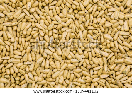 seed sunflower seeds. painted agro color for sorting and labeling. #1309441102