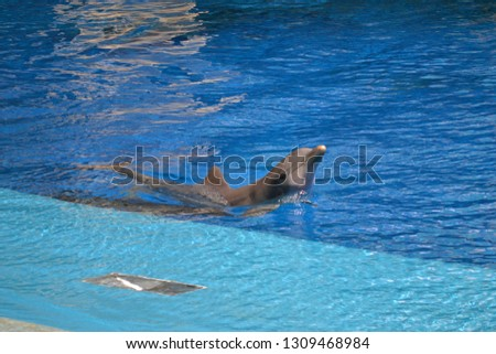 Portrait of a dolphin swimming  #1309468984