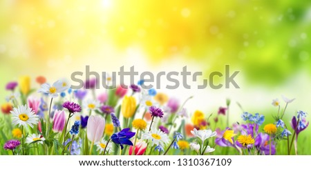 Floral nature spring background with green backdrop. Different wild beautiful flowers Royalty-Free Stock Photo #1310367109