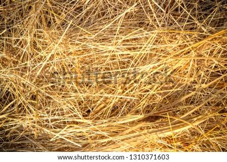 hay background, hay wallpaper, hay background macro #1310371603