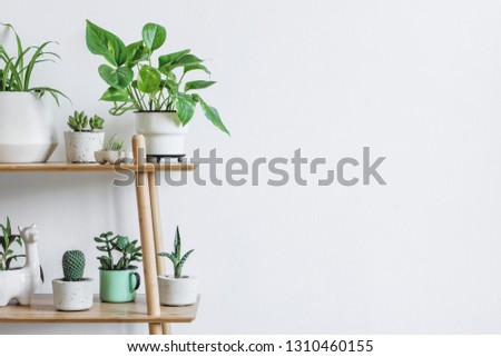 Scandinavian room interior with plants composition in design and hipster pots on the brown shelf. White walls. Modern and floral concept of home garden. Nature love. Copy space for inscription.