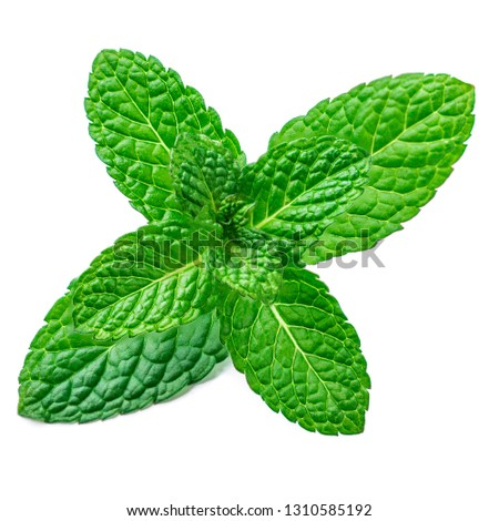 Fresh mint leaf isolated on the white background. Spearmint leaves, peppermint #1310585192