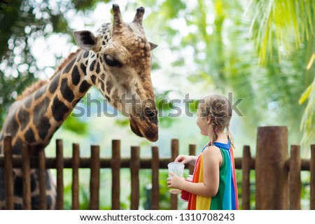 Family feeding giraffe in zoo. Children feed giraffes in tropical safari park during summer vacation in Singapore. Kids watch animals. Little girl giving fruit to wild animal. #1310708243