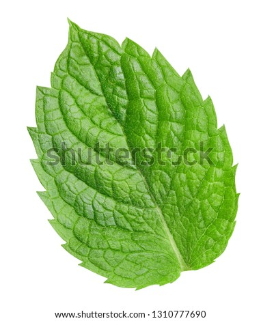 Mint leaves isolated on white. Fresh mint Clipping Path. Professional studio macro shooting #1310777690