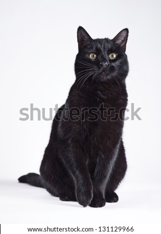 Black cat on a white