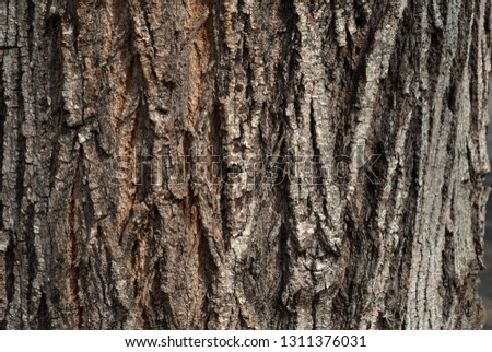 texture, surface, background #1311376031