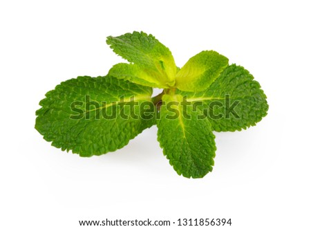 mint plant on white background isolated #1311856394