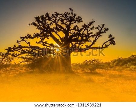 Silhouette of baobab tree at sunset with the yellow background. Tree of happiness, Senegal. Africa #1311939221