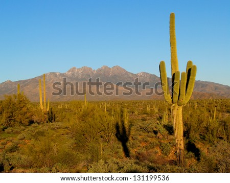 Saguaro Shadow #131199536
