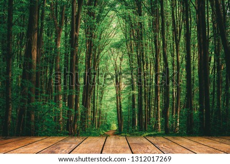 wood textured backgrounds in a room interior on the forest backgrounds #1312017269