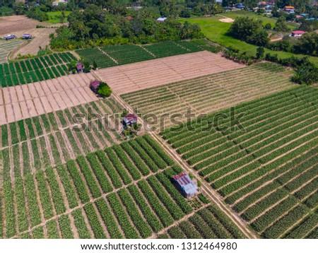 Aerial Drone image view of corn field in Tuaran, Sabah, Borneo  #1312464980