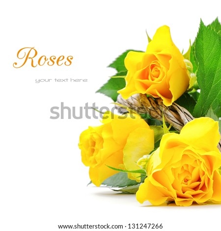 Yellow roses isolated over white