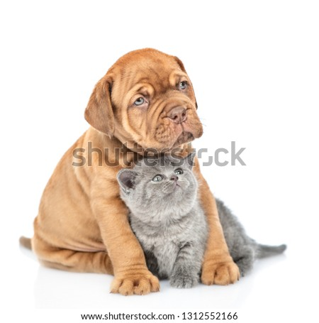 Puppy hugging kitten and looking up. isolated on white background #1312552166