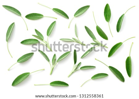 fresh sage herb isolated on white background, top view #1312558361