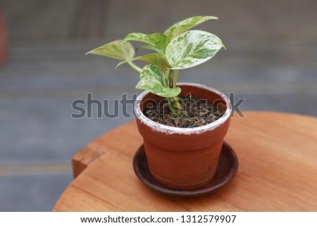 modern plants. Beautiful home green plant. #1312579907