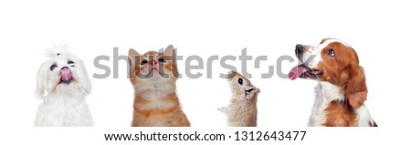 Many pets isolated on a white background #1312643477